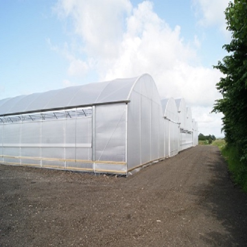 Skyplant Large Multi Span Greenhouse для сельского хозяйства