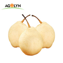 Chinese new crop sweet juicy Fresh golden Pear