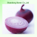 Fresh Red Onions with Top Quality in Shandong