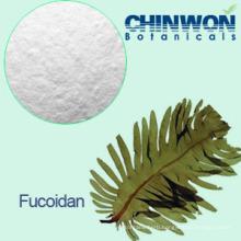 12. Brown Seaweed Extract Fucoidan 95%
