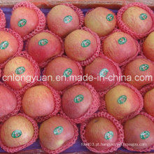 De Boa Qualidade Chinês fresco Qinguan Apple