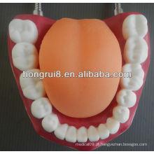 Modelo de Cuidados Dentários Médicos de Estilo Novo, limpeza de dentes