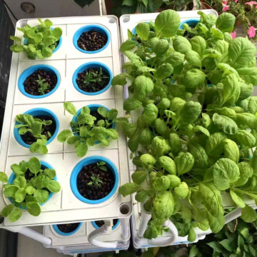 Skyplant Home And Office Hydroponic Plant Grow Systems Systems