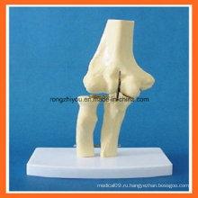 Модель анатомического моделирования анатомического моделирования локтевого сустава для медицинского обучения