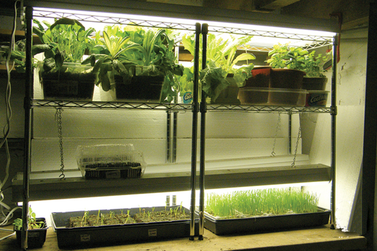 grow-light-system-for-starting-seeds-indoors