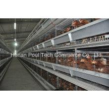 Neuer Typ Poul Tech Layer Chicken Cage System