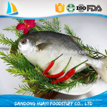 Frozen Pomfret Fish on Sale