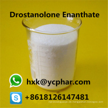 Bodybuildendes weißes Steroid pulverisiert Drostanolone Enanthate CAS 472-61-145