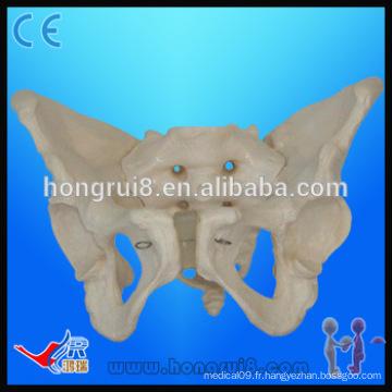 Modèle de pelvis en douceur entièrement flexible, modèle de plancher pelvien