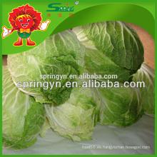 China Exportador de verduras de alta calidad fresco orgánico coles