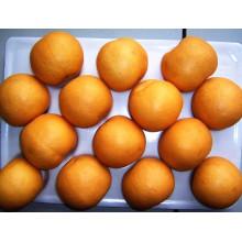 Leckerer frischer goldener / Fengshui Birnenlieferant
