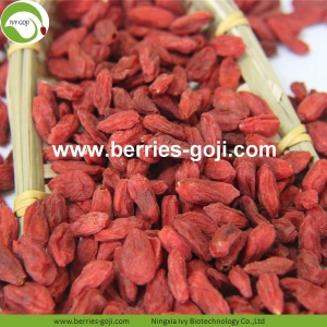 Fábrica al por mayor Nutrición Natural Ningxia Goji Berries