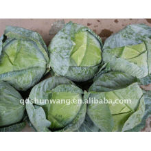 2013 fresh cabbage