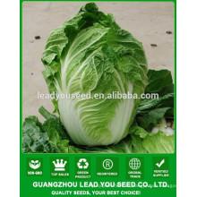 NCC04 Xiaohu pequeña col de China, pak choi semillas, tipos de repollo