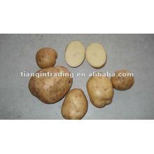 Shandong usine de prix de pommes de terre fraîches