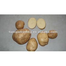 shandong fresh potato price factory