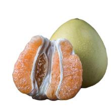 Hot Selling Natural Citrus Fruit Chinese Fresh Honey Golden Pomelo For Export