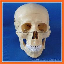 Hochwertiges anatomisches Training menschliches Schädel Modell