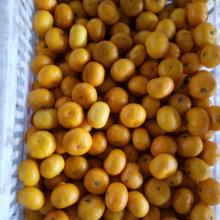 Mandarin jaune doux de bébé avec l'emballage de carton