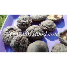Champignons shiitake lisses séchés à bon prix