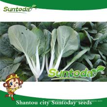 Suntoday vegetal hs código vegetal reliquia cosechadora pakchoy mejorar fruithigh veces plántulas de fruta para la venta semillas (37001)