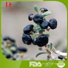 Großhandel China hochwertige schwarze goji / chinesische schwarze Wolfberry / goji Beere schwarz