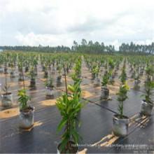 Tela tejida negra de 10 * 10 PP / estera de la mala hierba / cubierta de tierra