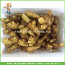 Fresh Ginger Exportador Chinês Gengibre 250g até 13,6 kg Caixa de PVC para EUA