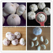Garlic with Normal White