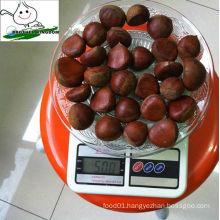 wholesale fresh chestnut