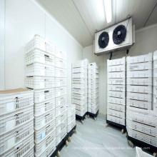 Low Temperature Storage Refrigeration Freezing Rooms