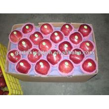 Manzana roja manzana / Huaniu / manzanas rojas de Navidad