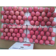 Frischer Stil und Kernobst Produkttyp frische Äpfel