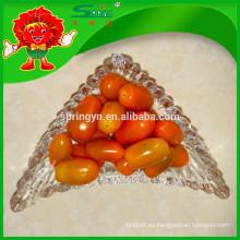 Vegetales amarillos de los tomates de cereza de Nutritious para la venta