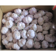 New Crop Chinese Normal White Garlic