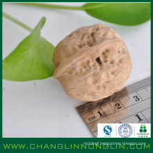 organic natural good quality whole crushed bulk walnuts in shell