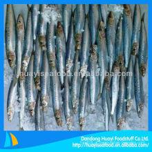 Sardinha fresca congelada à venda