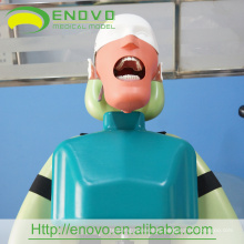 EN-U3 Wholesale II Type Dental Head Body Model Export Worldwide Countries
