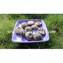 Bolso de 1 kg de hongos shiitake lisos secos