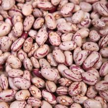 New Crop Oval Shape Light Speckled Kidney Bean