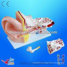 ISO Big Ear Anatomisches Modell, Anatomisches Ohrmodell, Anatomie Ohr