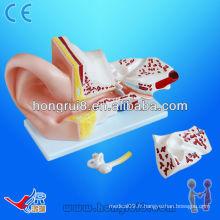 Modèle anatomique ISO Big Ear, modèle anatomique de l'oreille, anatomie de l'oreille