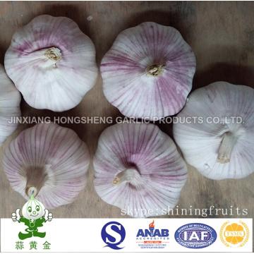 Fresh Jinxiang Normal White Garlic New Crop 2016
