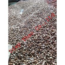 whole betel nut - old betel nut- dried betel nut