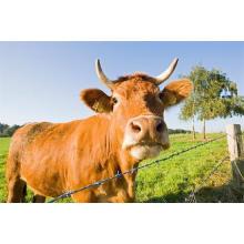 Cerca do campo de aço da junção de dobradiça resistente à corrosão / cerca dos carneiros no rolo / malha animal da cerca