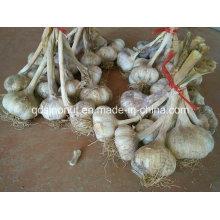 Новые урожаи чеснока 1 кг