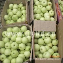 Good Quality Carton Packing Fresh Golden Apple