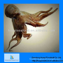 flower typed frozen octopus whole cleaned