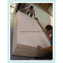 1220*2440mm Poplar Core Mr Glue Plywood for Furniture Use