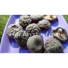 Seta de Shiitake lisa secada al por mayor de alta calidad superior